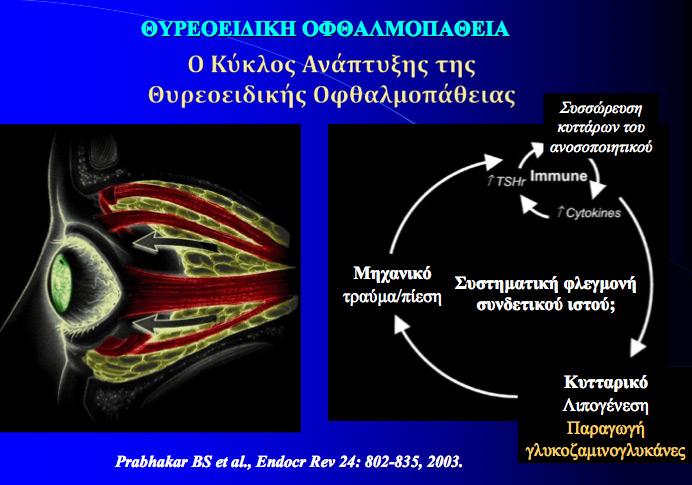 thyreoeidiki2